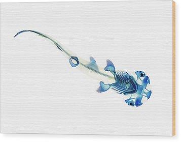 Bonnethead Shark Wood Print by Adam Summers