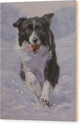 Border Collie Portrait II Wood Print by John Silver