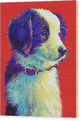 Border Collie Puppy Wood Print by Jane Schnetlage