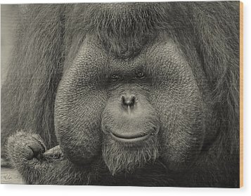 Bornean Orangutan II Wood Print by Lourry Legarde