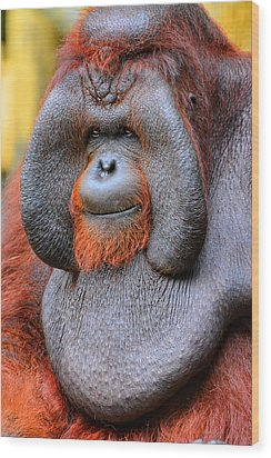 Bornean Orangutan Iv Wood Print by Lourry Legarde