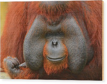 Bornean Orangutan Wood Print by Lourry Legarde