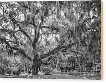 Bosque Bello Oak Wood Print by Dawna  Moore Photography