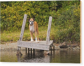 Boxer On Lake Dock Wood Print by Stephanie McDowell