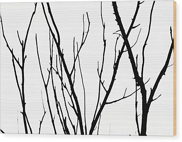 Branches Wood Print by Aidan Moran