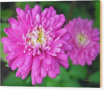 Bright Pink Zinnia Flowers Wood Print by Christina Rollo
