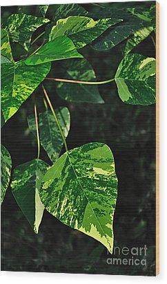 Bright Variegated Leaves Wood Print by Kaye Menner