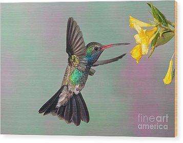 Broad-billed Hummingbird Wood Print by Jim Zipp