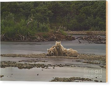 Brown Bear And Cubs Taking A Break From Fishing For Salmon Wood Print by Dan Friend