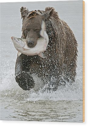Brown Bear With Salmon Catch Wood Print by Gary Langley