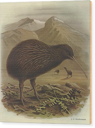 Brown Kiwi Wood Print by J G Keulemans