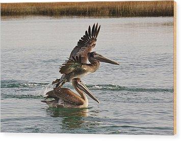 Brown Pelicans In The Marsh Wood Print by Paulette Thomas