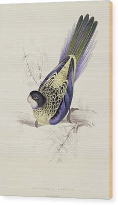 Browns Parakeet Wood Print by Edward Lear
