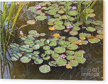 Bruges Lily Pond Wood Print by Carol Groenen