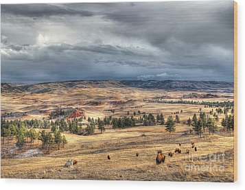 Wood Print featuring the photograph Buffalo Before The Storm by Bill Gabbert