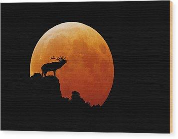 Bull Elk Wood Print by Stuart Harrison