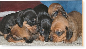 Bunch Of Puppies Wood Print by Anthony Kougl