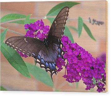 Butterfly And Friend Wood Print by Luther   Fine Art