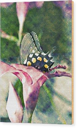 Butterfly In Flower Wood Print by Susan Leggett
