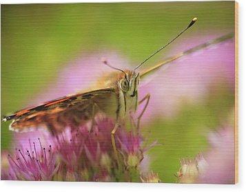 Butterfly Macro Wood Print by Adam Romanowicz