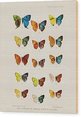 Butterfly Plate Wood Print by Pati Photography
