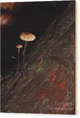 C Ribet Mushroom And Fungi Art The Sage Wood Print by C Ribet