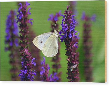 Cabbage White Butterfly Wood Print by Christina Rollo