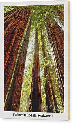 California Coastal Redwoods Wood Print by Artist and Photographer Laura Wrede