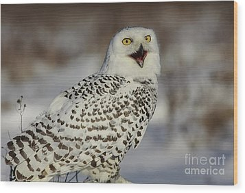 Call Of The North - Snowy Owl Wood Print by Inspired Nature Photography Fine Art Photography