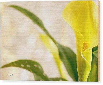 Calla Lily Two Wood Print by Bob Orsillo