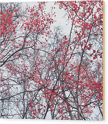 Canopy Trees Wood Print by Priska Wettstein