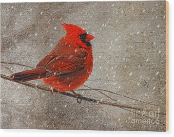 Cardinal In Snow Wood Print by Lois Bryan