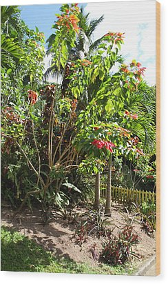 Caribbean Cruise - St Kitts - 1212187 Wood Print by DC Photographer