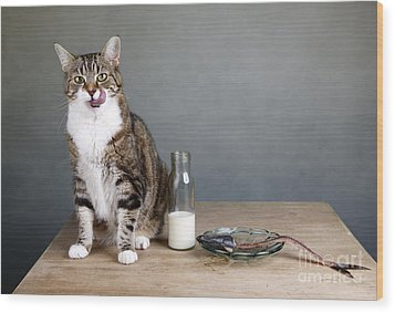 Cat And Herring Wood Print by Nailia Schwarz
