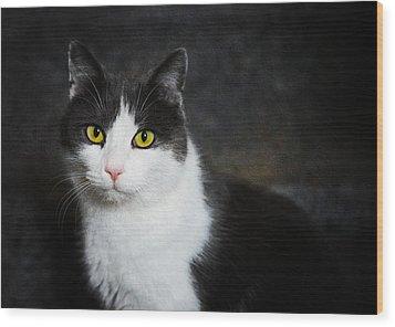 Cat Portrait With Texture Wood Print by Matthias Hauser