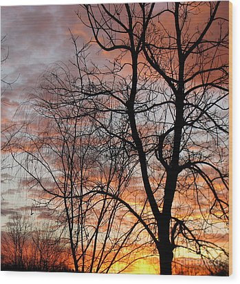 Catalpa Wood Print by Fred  Sheridan