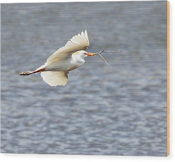 Cattle Egret In Flight Wood Print by Dawn Currie