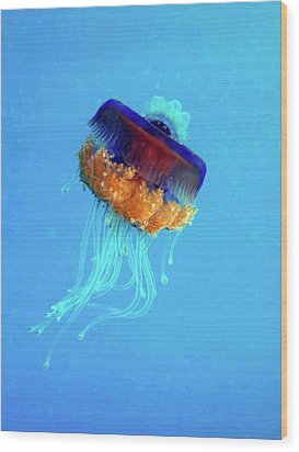 Cauliflower Jellyfish Wood Print by Louise Murray