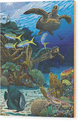 Cayman Turtles Re0010 Wood Print by Carey Chen