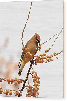 Cedar Wax Wing Wood Print by Floyd Tillery
