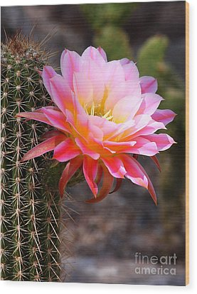Cereus In Pink Wood Print by Ruth Jolly
