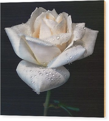 Champagne Rose Flower Macro Wood Print by Jennie Marie Schell