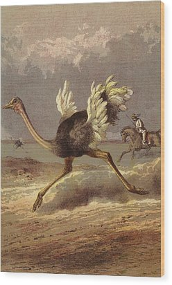 Chasing The Ostrich Wood Print by English School