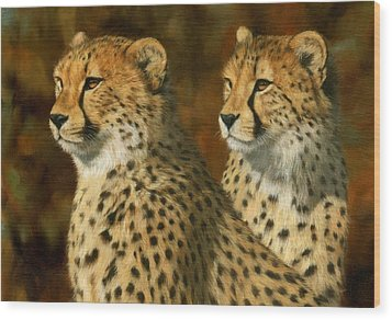 Cheetah Brothers Wood Print by David Stribbling