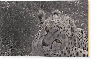 Cheetah Eyes Wood Print by Martin Newman