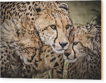 Cheetah Family Portrait Wood Print by Mike Gaudaur