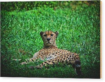 Cheetah Wood Print by Karol Livote