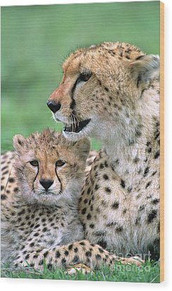 Cheetah Mother And Cub Masai Mara Wood Print by