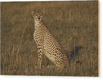 Cheetah On Savanna Masai Mara Kenya Wood Print by Hiroya Minakuchi