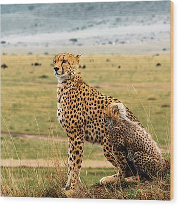 Cheetahs Wood Print by Babak Tafreshi
